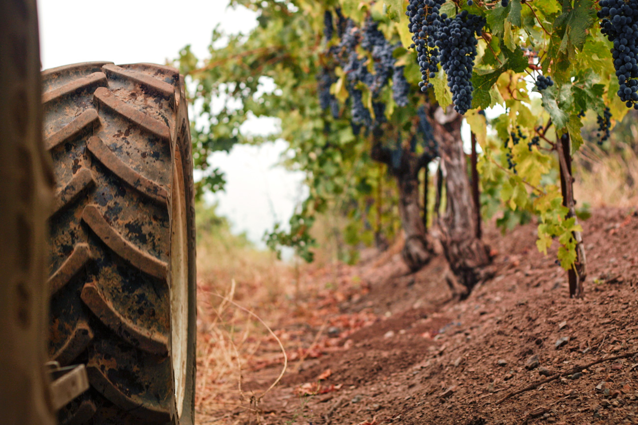 DuMOL Winery tractor in vineyard
